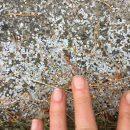 Industrispild - plastik forurening i danmark - plastic change