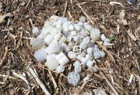 Biocarriers Roskilde Vig - Plastic Change