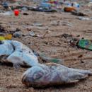 Plastikforurening fisk
